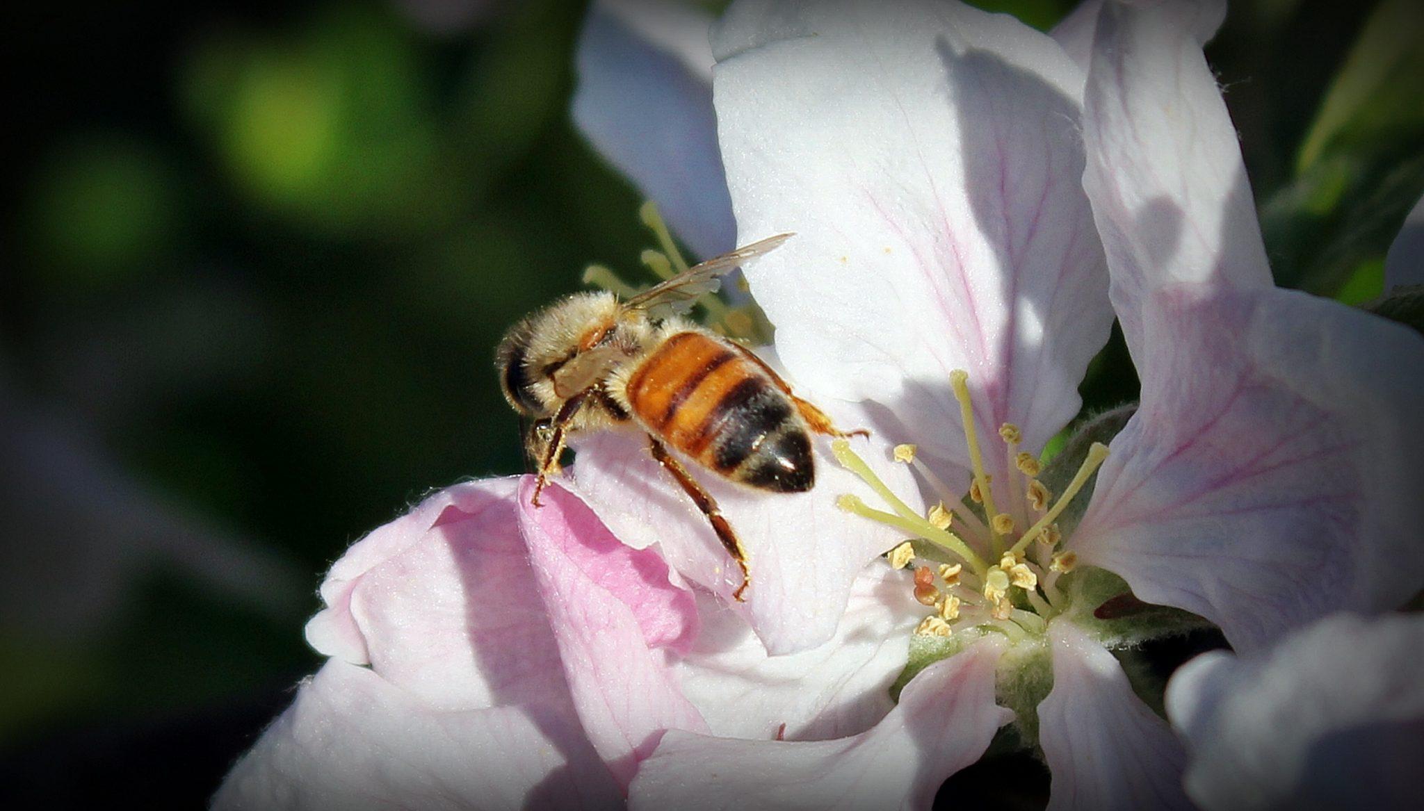 Jus de Fruits artisanal haut de gamme naturel Chateau du Clau abeillec