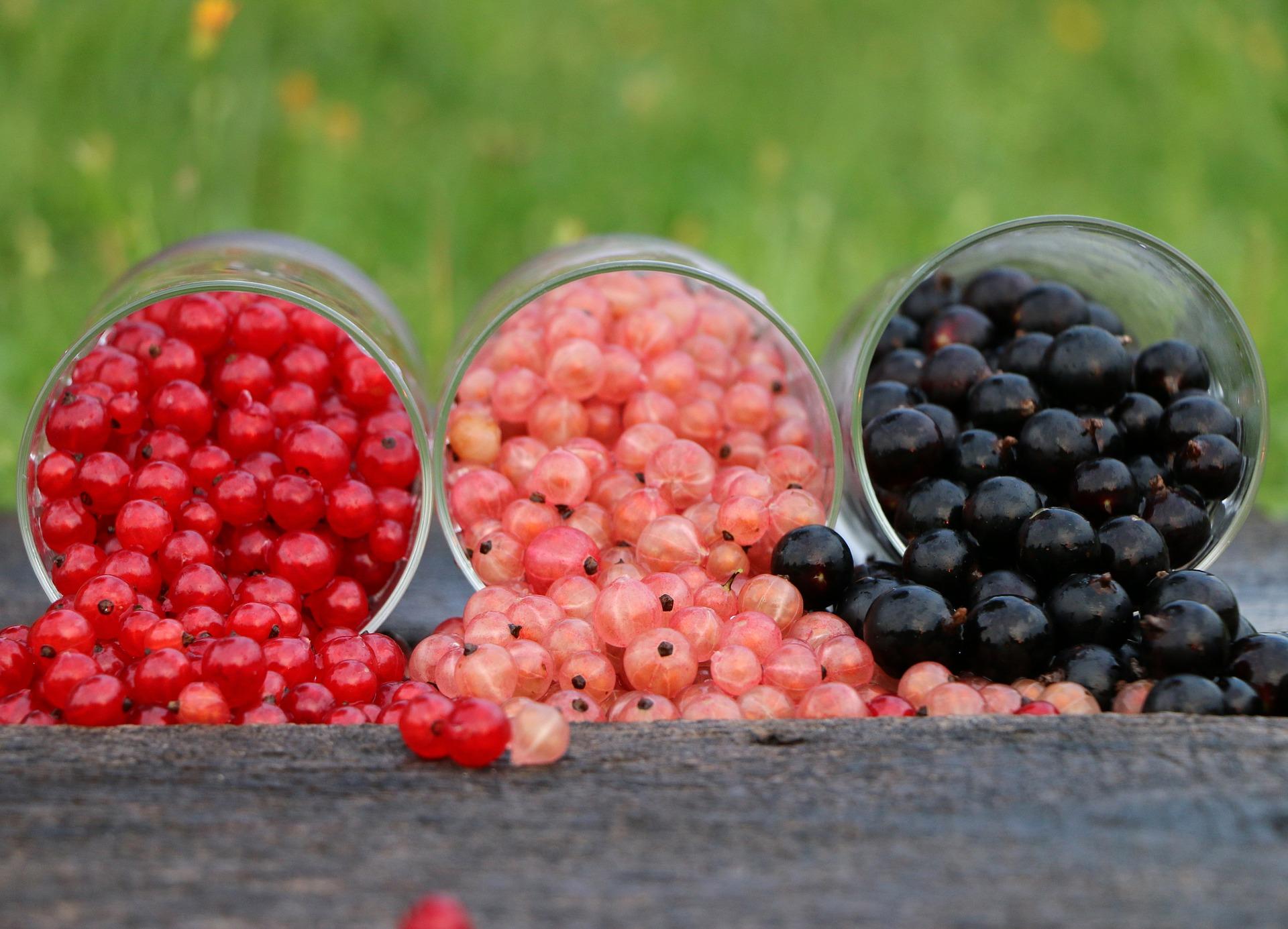 Cassis Chateau du Clau jus de fruits haut de gamme