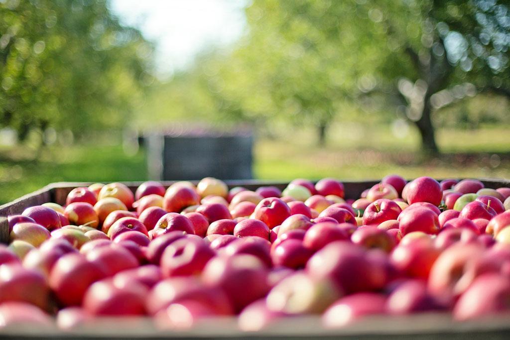 Palox Chateau du Clau jus de fruits haut de gamme