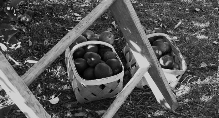 Jus de Fruits artisanal haut de gamme naturel Chateau du Clau pommier echelle