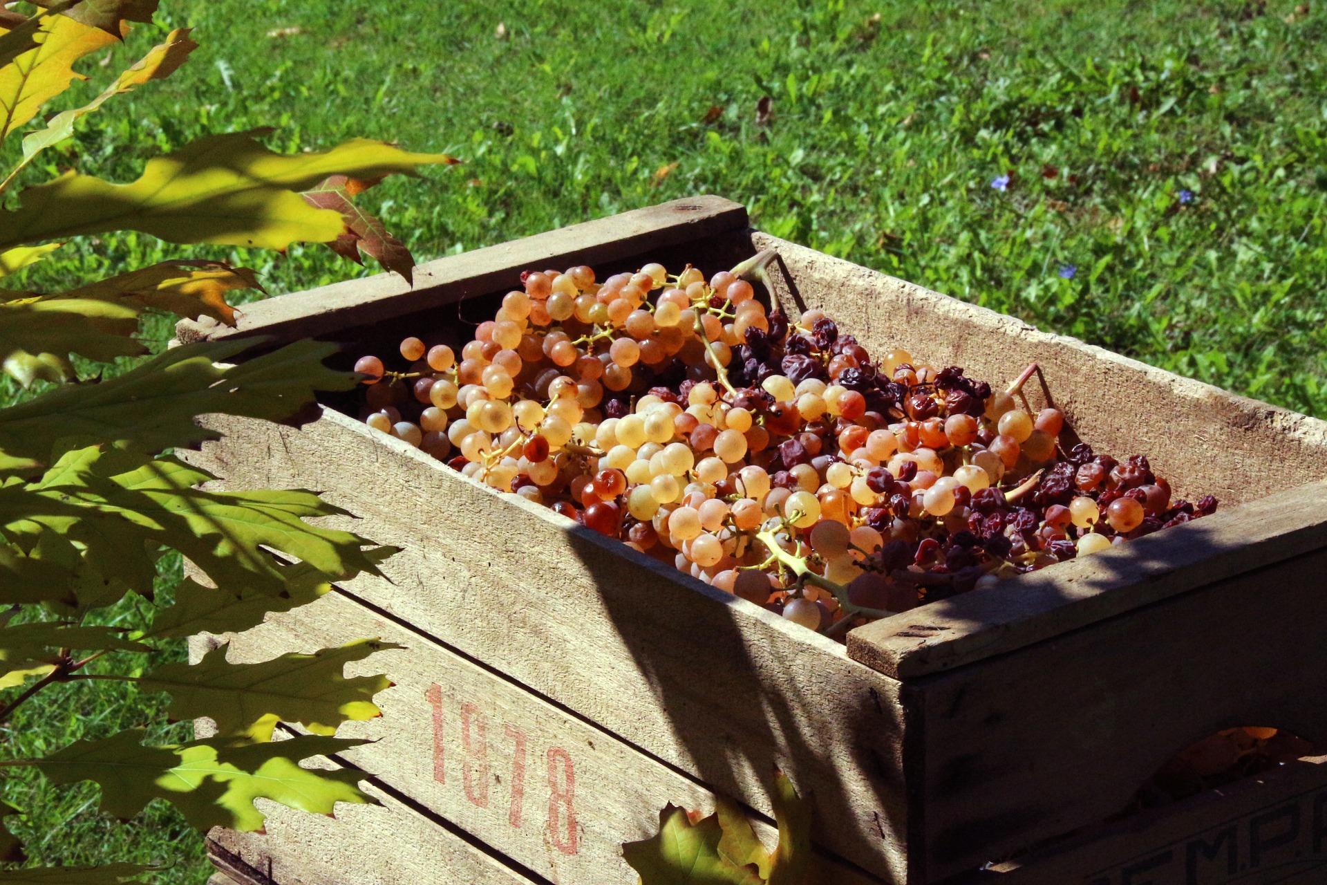 Raisin Chateau du Clau jus de fruits haut de gamme